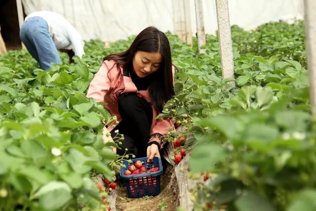 平顶山周边这座山太率性,假期还能摘草莓,前100名免费送!插图4
