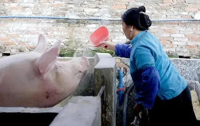 """猪市发生""""大地震"""",14省猪价飘绿,会不会""""一滑到底""""呢?"""