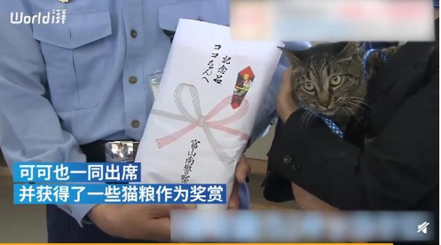 日本家猫协助救下落水男子获警方嘉奖,网友:你是不是黑猫警长?-第2张