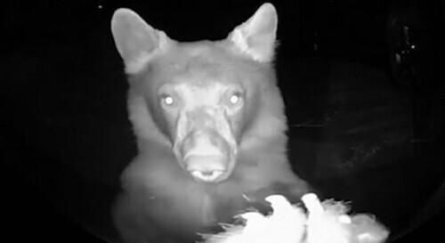 加州两只熊深夜按门铃 搞笑场面被监视器记录-第1张