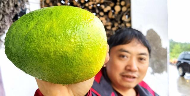 湖北宜昌悦隐农场:种植的早熟青皮脐橙俏,每斤6元供不应求