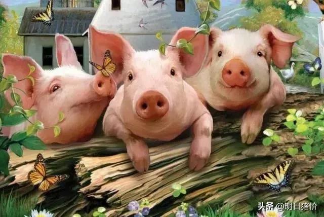 2020.10.18-明日猪价