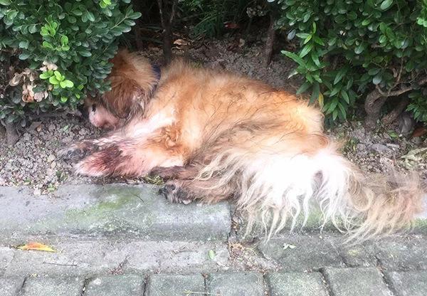 上海首例养犬人遗弃犬只案:罚五百元,吊销犬证